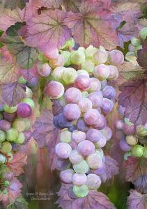 Story Art - Grapes Of Many Colors